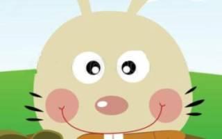 Сколько зубов у кролика?