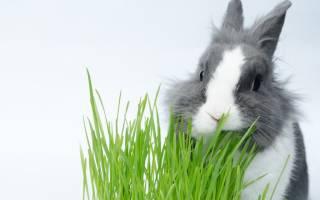 Какую траву можно давать кроликам, а какую нельзя: правила сбора и кормления