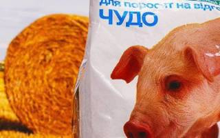 Премиксы для поросят и свиней: виды и состав