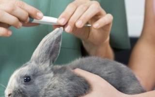 Температура тела у кролика в норме