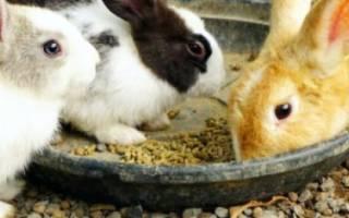Когда отсаживать крольчат от крольчихи, в каком возрасте лучше это делать?