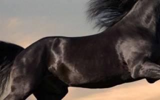Как называется дикая лошадь: описание пород диких лошадей