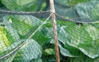 Как обработать капусту содой от вредителей?
