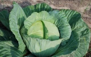 Нужно ли обрывать листья у цветной капусты?