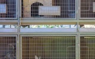 Двухъярусные клетки для кроликов своими руками: варианты конструкции, пошаговая инструкция