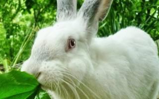 Чем нельзя кормить кроликов — рекомендации, рацион, продукты