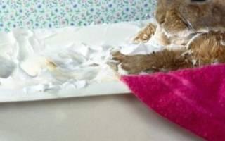 Можно ли купать декоративного кролика и как это делать?