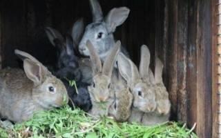 Кролики на даче — как разводить и в чем выгода этой деятельности
