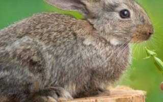 Можно ли кроликам давать горох, его стручки и ботву?