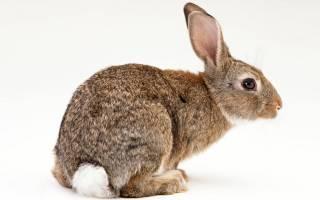 Можно ли давать кроликам тысячелистник?