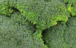 Капуста брокколи: сорта, виды и фото