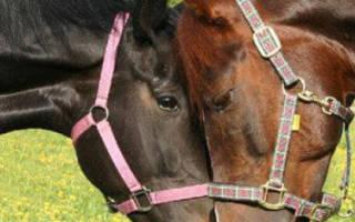 Случная болезнь лошадей: диагностика, причины и лечение