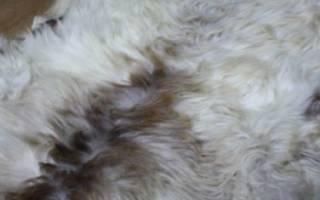 Шкура овцы и ее выделка в домашних условиях
