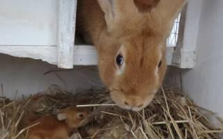 Сколько нужно сена кролику на зиму?