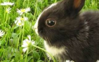 Новорожденные кролики: уход, развитие и отсадка из гнезда
