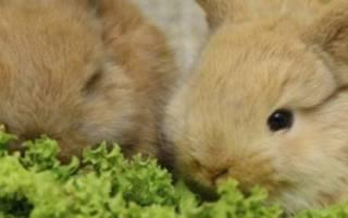 Как правильно организовать уход за декоративными кроликами в домашних условиях?
