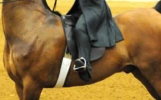 Американская верховая лошадь — особенности породы, фото
