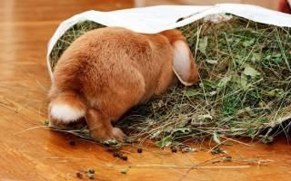 Чем кормить кроликов летом: правильный рацион
