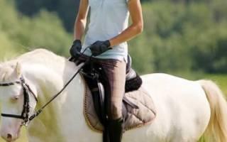 Лошади изабелловой масти: особенности окраса