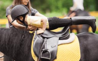 Как обучить лошадь верховой езде: инструкция
