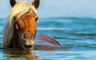 Умеют ли лошади плавать и нужно ли их обучать?