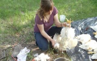 Как ощипать курицу — ощипывание курицы в домашних условиях