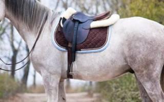 Терская порода лошадей: описание и характеристики