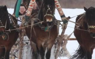 Мезенская порода лошадей: история и описание