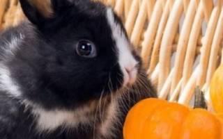 Чем и как кормить маленьких крольчат в разном возрасте?