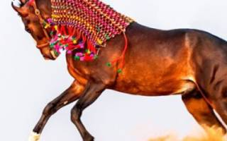 Древняя порода лошадей
