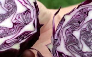 Лучшие сорта краснокочанной капусты: обзор и фото