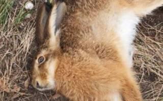 Почему дохнут кролики: возможные причины