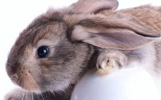 Каким зерном лучше кормить кроликов?