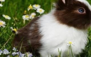 Кролик чихает: причины, лечение, что делать