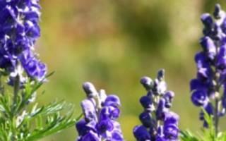 Ядовитые растения и травы для кроликов