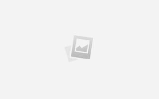 Ушной клещ у кошек: симптомы, лечение, профилактика отодекоза