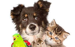 Ассоциированная вакцина для кроликов от миксоматоза и ВГБК